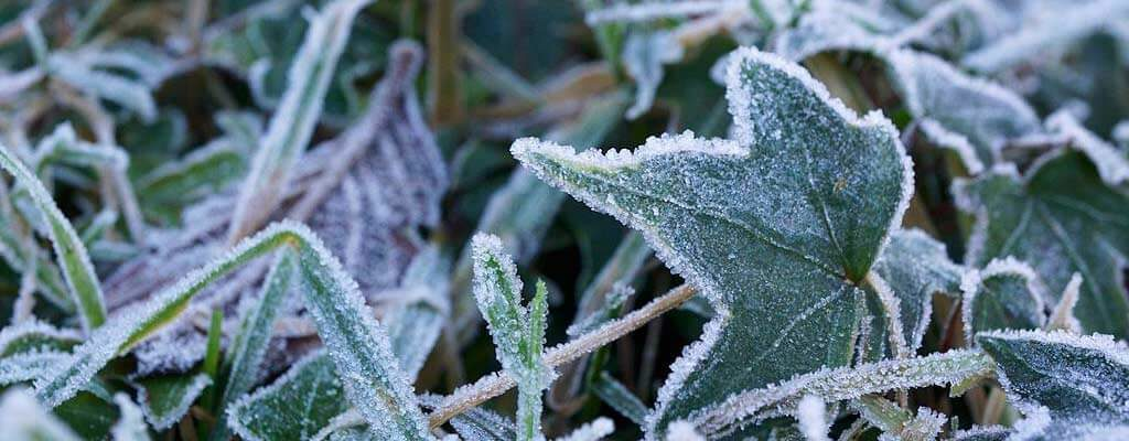 Prepare for the first frost